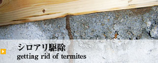 シロアリ駆除 getting rid of termites